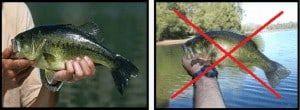 coger un pez correctamente