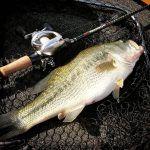 pesca black bass