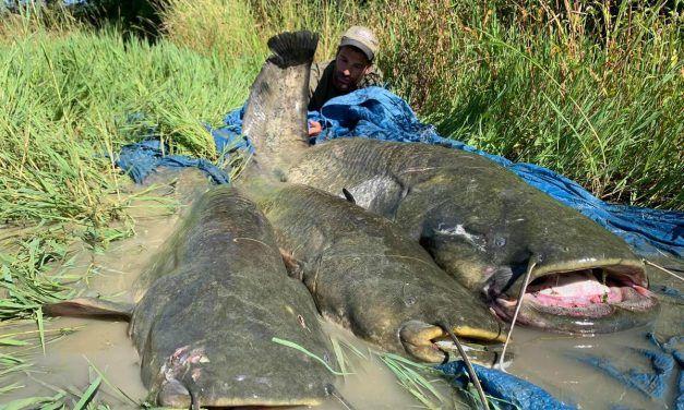 La pesca en el embalse de mequinenza