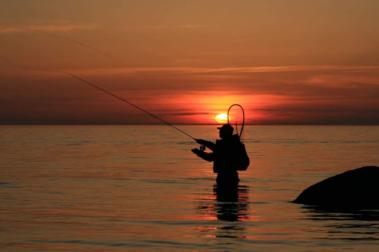 La pesca de percas a mosca