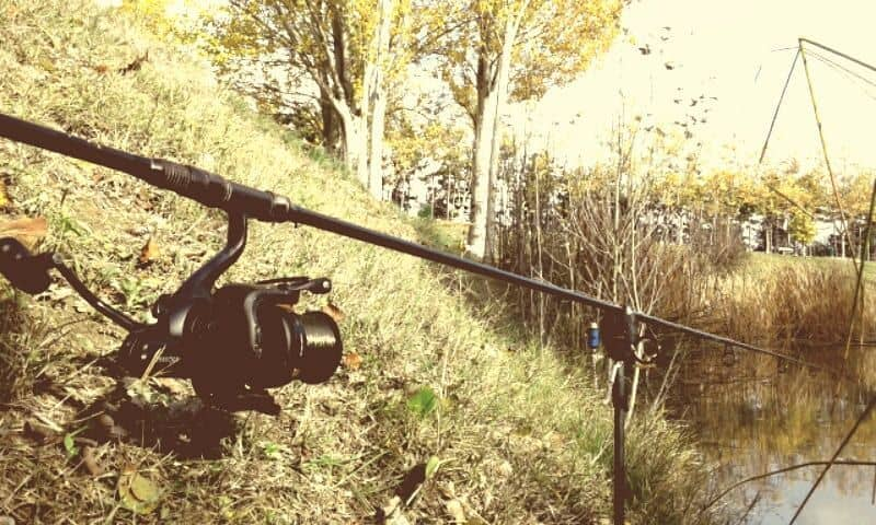 pescar al stalking