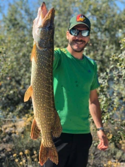 pesca lucios