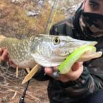Descubriendo los señuelos de Roshi fishing